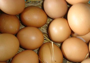 Ăn trứng giúp giảm cân và tăng trí tuệ 1