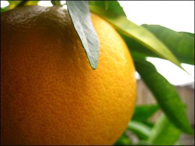 Những trái cây giảm béo bụng 3