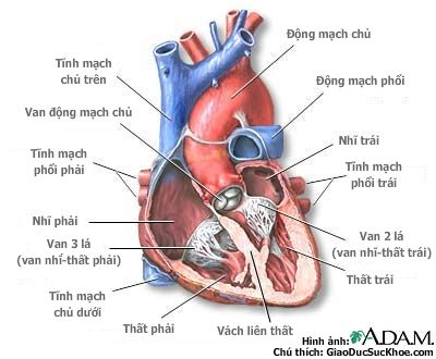 Nguyên nhân và dấu hiện của suy tim