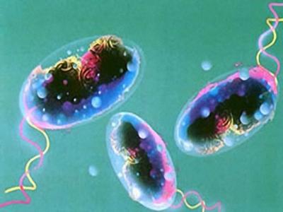 Cúm heo là gì? Triệu chứng và cách phòng ngừa 1