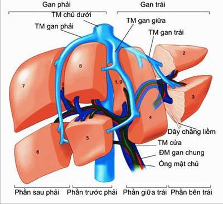 Xét nghiệm và chẩn đoán bệnh động mạch vành 1