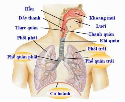 p119908 Bệnh hô hấp thường gặp ở trẻ trong mùa xuân