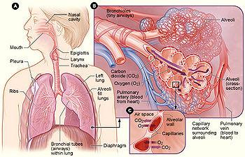 Bệnh tăng áp lực động mạch phổi