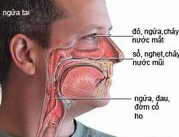 Hiểu rõ hơn về viêm mũi dị ứng 1