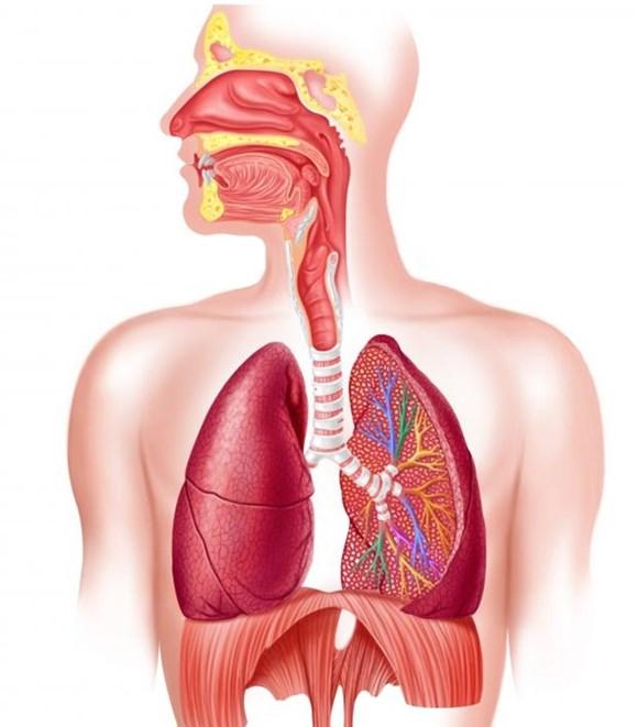 Nguyên tắc trong điều trị viêm phổi 1